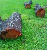 Стволы дерева на зеленой траве Стоковое Фото