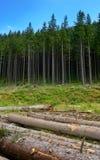 Стволы дерева отрезанные и штабелированные в долине горы Стоковые Изображения