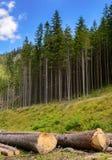 Стволы дерева отрезанные и штабелированные в долине горы Стоковые Фото