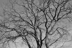 Стволы дерева Стоковая Фотография RF