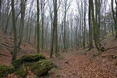 Стволы дерева Стоковые Изображения