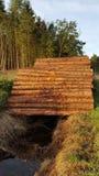 Стволы дерева стоковое изображение rf