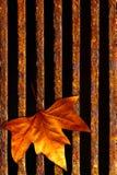 стеките листья стоковые фото