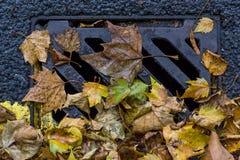 Стеките предусматрива в осени стоковая фотография rf