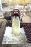 Стеките сделайте пену на пакостной воде Стоковые Изображения RF