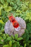 2 стекла с домодельным вином на пне дерева в лете паркуют Стоковые Изображения
