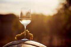 Стекло белого вина с виноградиной Стоковое Изображение