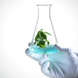 стекло бутона растет лаборатория стоковое фото rf