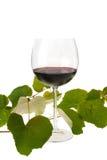 стекло выходит красное вино лозы Стоковая Фотография RF