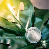 Стекло глобуса мира кристаллическое на зеленых лист стоковое изображение