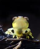 стекло лягушки Стоковое Изображение RF