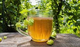 Стекло пива с конусами хмеля на старом деревянном столе на солнечном саде лета стоковое изображение rf