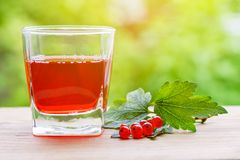 Стекло с соком красной смородины и ветвью ягод стоковая фотография rf