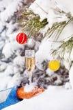 Стекло с шампанским в зиме Стоковые Фото
