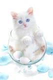 стеклянная белизна котенка Стоковая Фотография RF