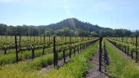 Стеклянная гора в Napa Valley от нашей фермы стоковая фотография rf
