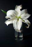 стеклянная лилия Стоковое Изображение RF