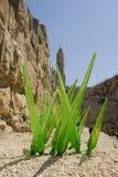 стеклянная трава Стоковые Изображения RF