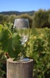 стеклянное вино Стоковые Фотографии RF