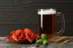 Стеклянное пиво с раками, конусами хмеля и ушами пшеницы с темной деревянной предпосылкой Концепция винзавода пива пиво предпосыл Стоковые Фотографии RF