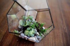 Стеклянное florarium на таблице стоковое фото