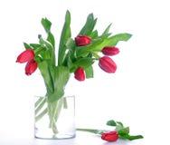 стеклянные тюльпаны красного цвета опарника Стоковая Фотография RF