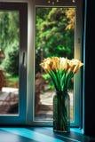 стеклянный желтый цвет вазы тюльпанов стоковые изображения rf