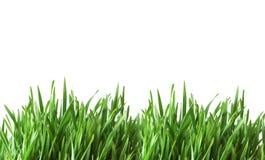 стеклянный зеленый цвет изолировал Стоковые Фото