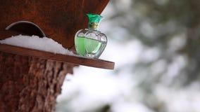 Стеклянный снег леса зимы дух акции видеоматериалы