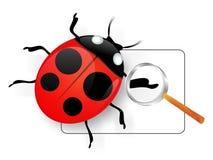 стеклянный ladybird увеличивая вниз Стоковое фото RF