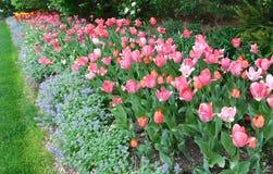 Стеклярус тюльпана и ковра стоковое изображение