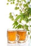 2 стекла завода пива и хмеля Стоковое фото RF