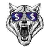 Стекла дикого животного собаки волка нося с знаком доллара Стоковые Изображения RF