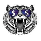 Стекла одичалого тигра нося с иллюстрацией знака доллара с диким животным для футболки, эскиза татуировки, заплаты Стоковое фото RF