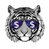 Стекла одичалого тигра нося с иллюстрацией знака доллара с диким животным для футболки, эскиза татуировки, заплаты Стоковое Изображение RF