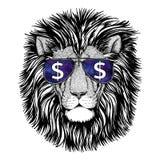 Стекла одичалого льва нося Стоковое Фото
