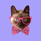 Стекла реалистического кота нося, с смычком Стоковое Изображение
