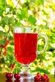 Стекло красных сока вишни и вишен и красных смородин на естественной предпосылке Стоковое Изображение RF