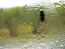 Стекло окна, муха и падения дождя Стоковые Изображения