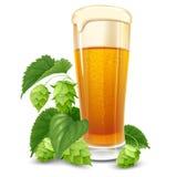 Стекло пива и хмелей Стоковые Изображения