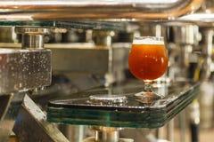 Стекло пива на винзаводе Стоковое фото RF