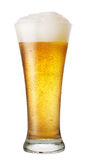 Стекло пива с падениями Стоковое фото RF
