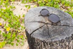 Стекло Солнця на заводе пня и pes-caprae ипомея на пляже Стоковые Изображения