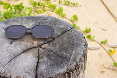Стекло Солнця на заводе пня и pes-caprae ипомея на пляже Стоковое Фото