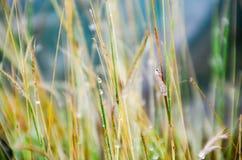 Стекло с малым insact дождливого дня Стоковые Фотографии RF