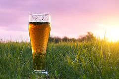 Стекло холодного пива на заходе солнца на траве в зеленом поле Стекло Misted с падениями воды Стоковая Фотография