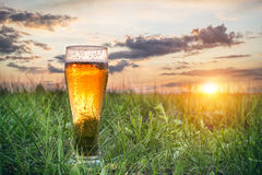 Стекло холодного пива на заходе солнца стоковое изображение rf
