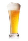 Стекло холодного светлого пива Стоковая Фотография