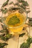 Стекло чая крапивы Стоковая Фотография
