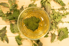 Стекло чая крапивы Стоковое Фото